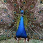 حديقة جنة الطيور بورصة